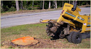 Sample stump grinding project in Manchester NH