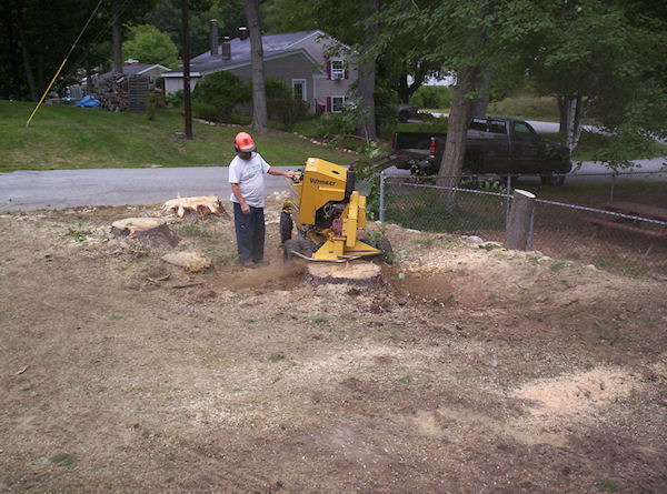 stump grinding sample project Salem NH