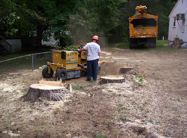 stump grinding sample project Milford NH